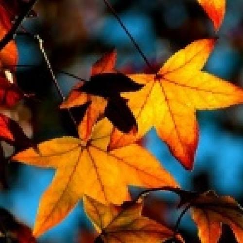 Fall Season: the Mark of a Fresh Start